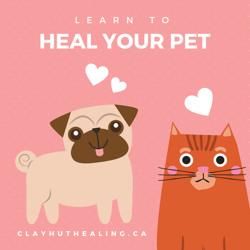 Learn to Heal Your Pet